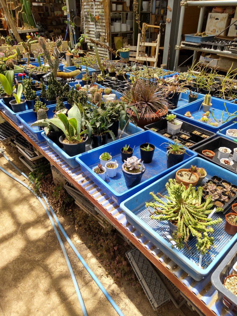 サボテン・多肉植物の陳列
